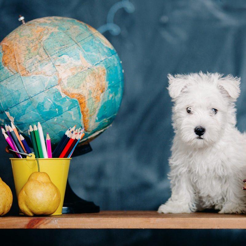 international puppy