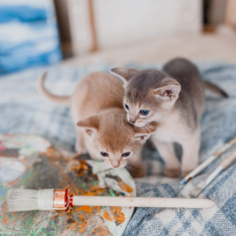 kitty painters