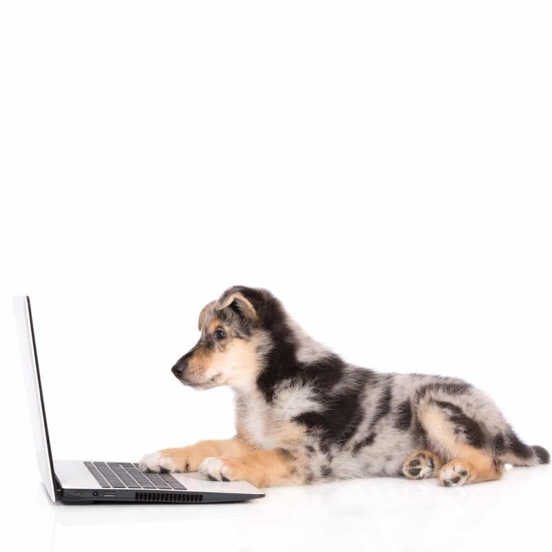 trademark filing puppy