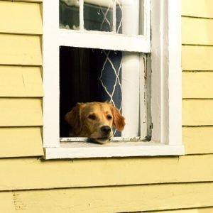 trademark monitoring puppy
